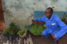Odlaren Babakila vid några trädplantor. Han är mentor till flera nytillkomna odlare.